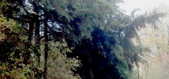Orkan Christian machte auch vor Rendsburg-Eckernförde nicht halt – schwere Schäden im Kreis