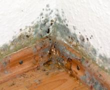 Verbraucherberatung in Rendsburg – Schimmel im Haus durch Dämmung verhindern
