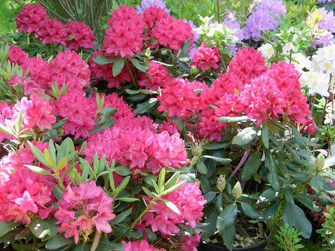 Fotogalerie: Wunderschön: Die Flora in Rendsburg – alles für den Garten