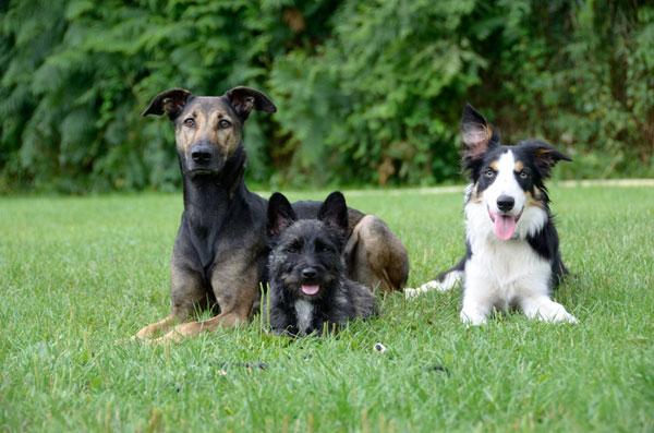 Hundetag in der Arche Warder