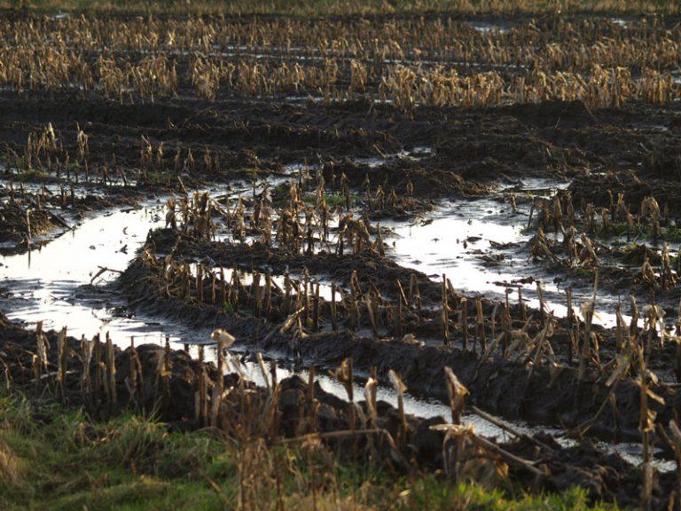 """Landwirtschaftsminister Albrecht in Rendsburg:  """"Bauern-Bashing ist ein No-Go! Offener Dialog gesucht!"""